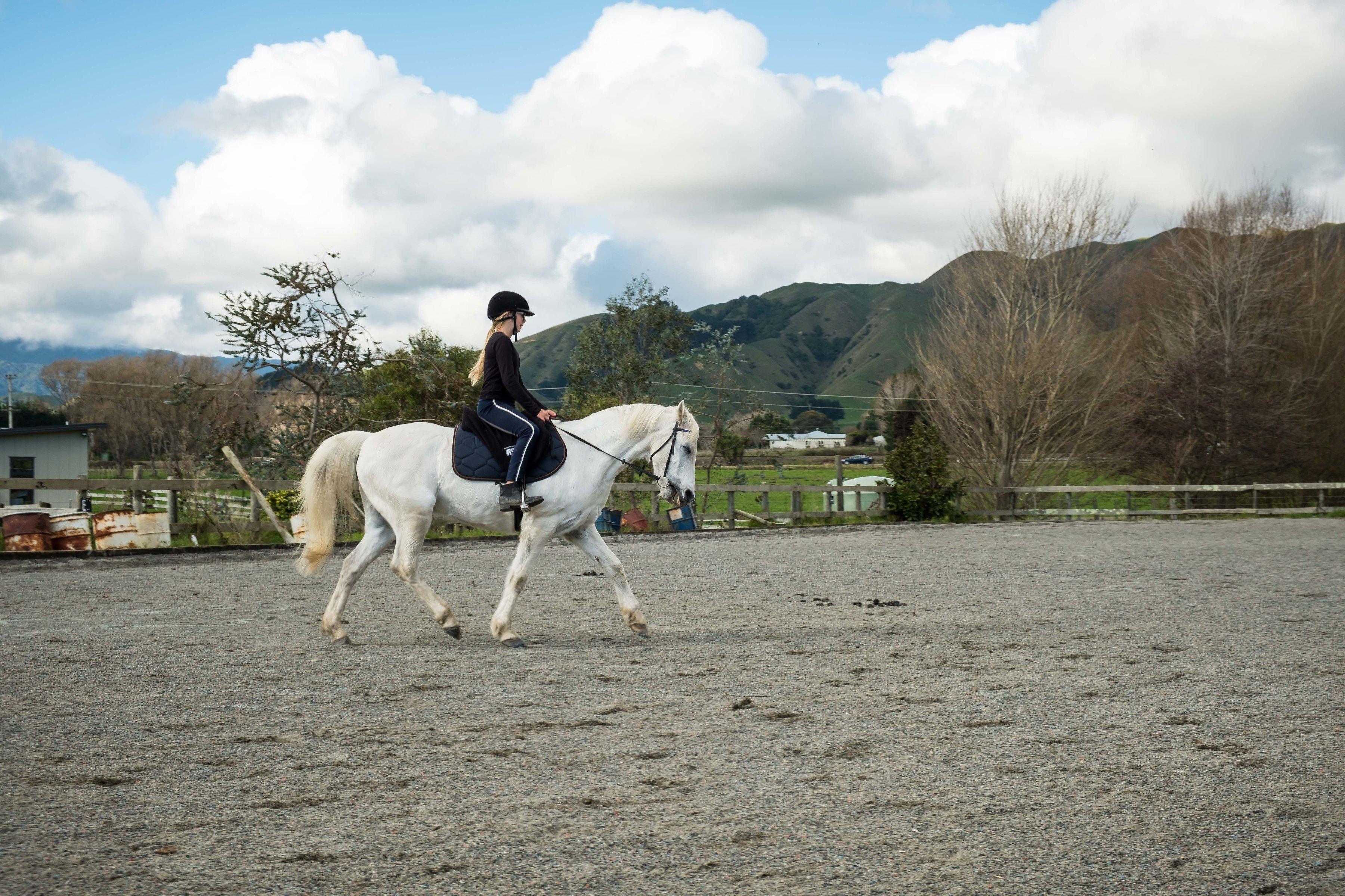 te horo equestrian horse in arena